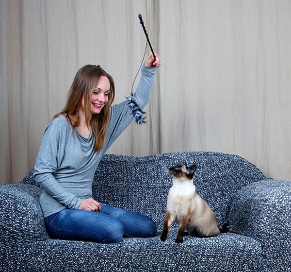 Meow Skill
